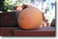 tucson grapefruit